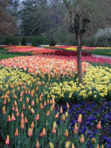 Tulips, daffodils and pansies on the Flower Garden Walk