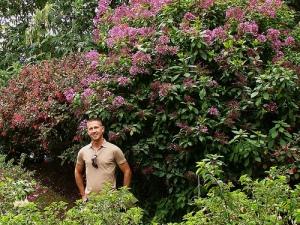 Fuchsia arborea Ecuador