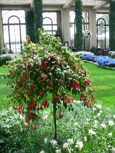 Fuchsia standard