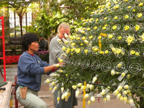 Yoko and a member of her team at work, placing each flower into the dome-shaped frame.