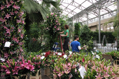"Gardeners installing a ""Lily Tree"" in the East Conservatory"