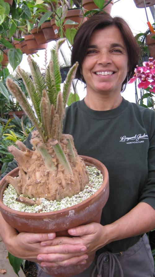 Joyce with the rooted Encephalartos