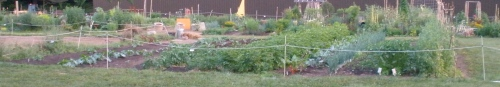 PG Vegetable Plot on Red Lion Row