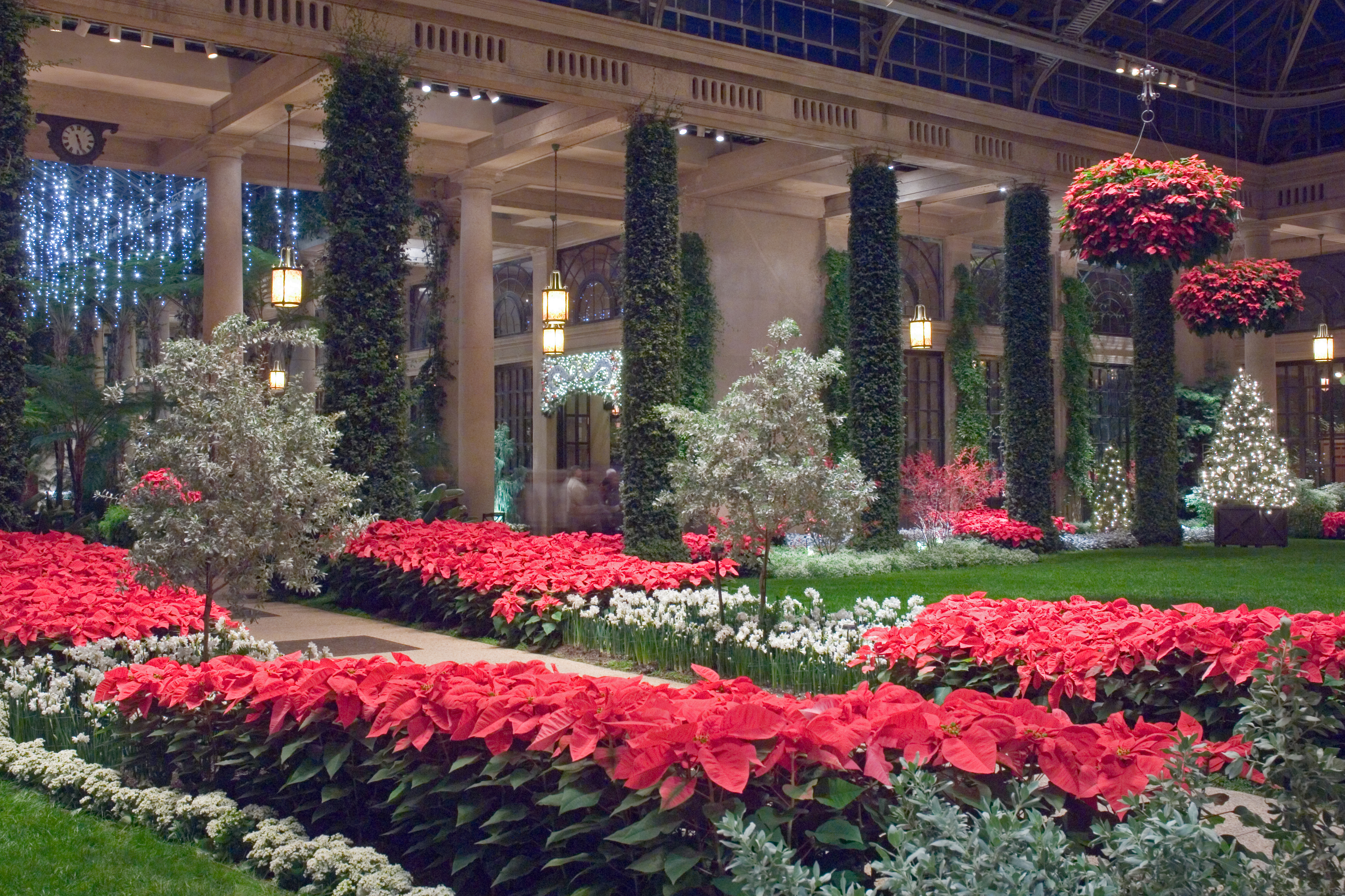 Poinsettia Longwood Gardens Behind The Plants