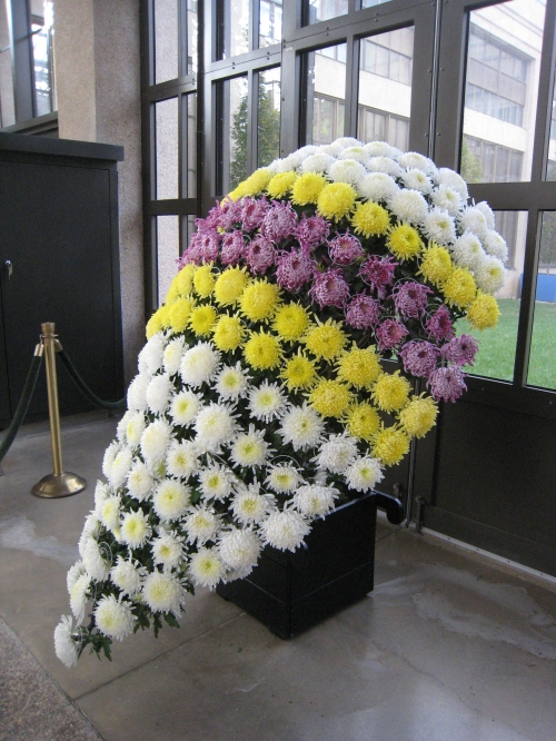 Tri-colored shield chrysanthemum, 2011