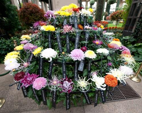 100-cultivar chrysanthemum, 2011