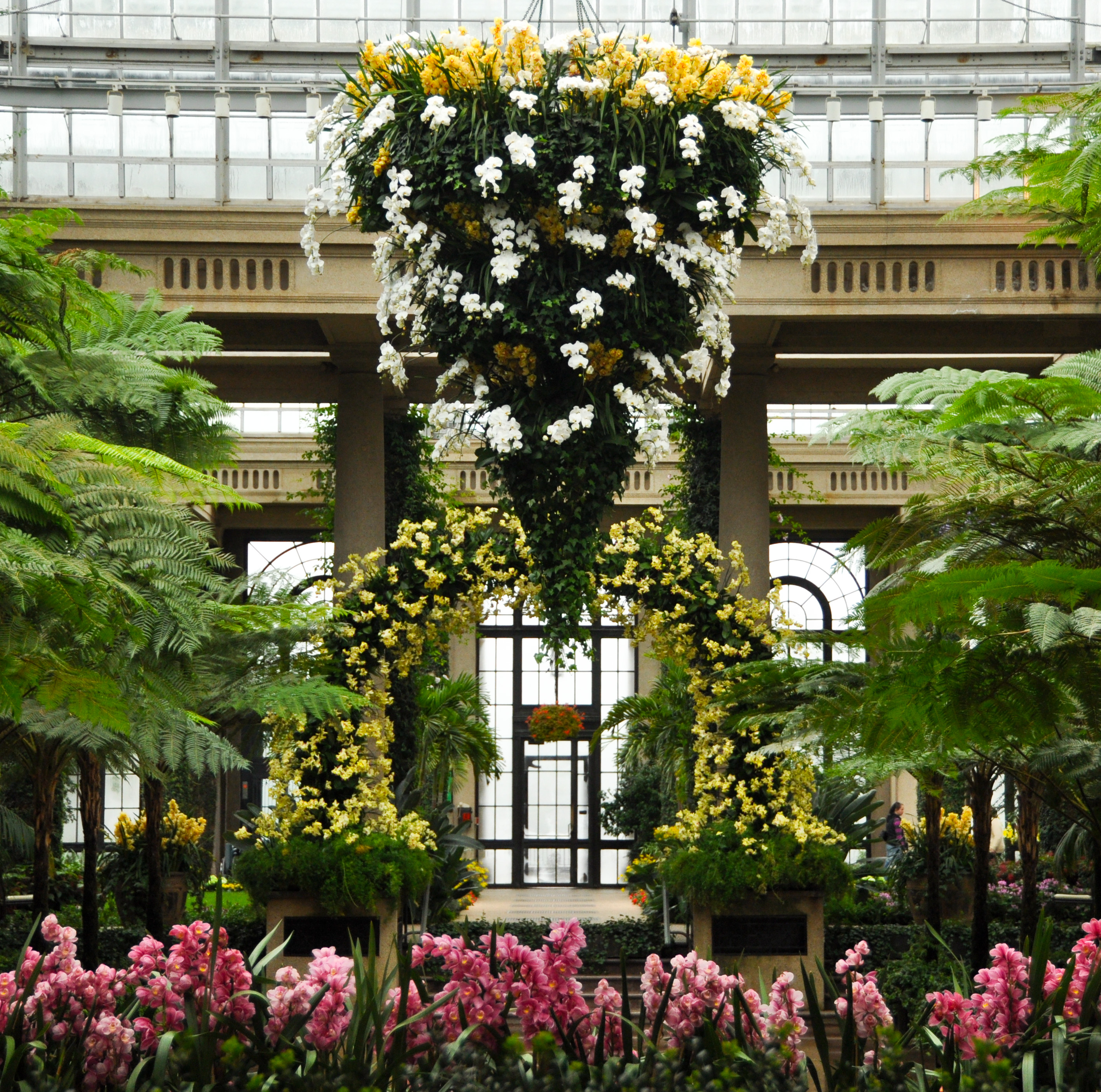 The beauty of orchid extravaganza longwood gardens behind the plants