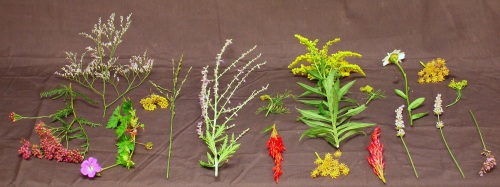 Examples of plants that will preserve color well, once they are pressed and dried.