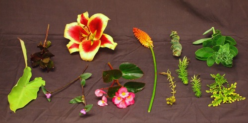 Examples of plants that do press well and will turn brown when dry due to their high water content.